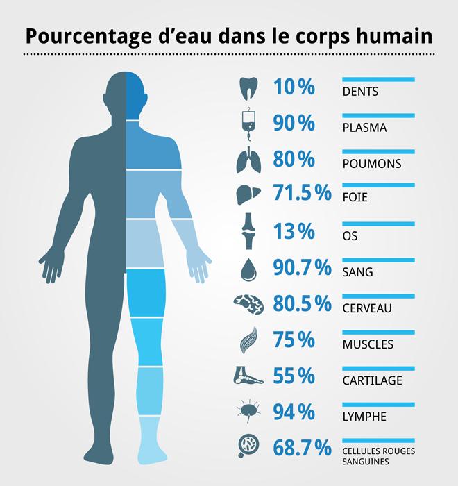 Eau_corps_humain